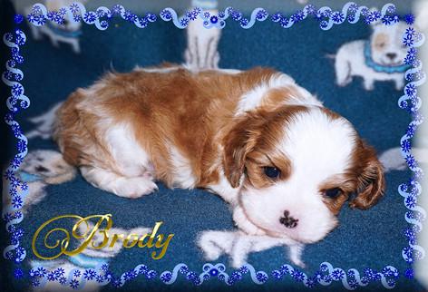 21-03-26 Brody 4 4w.jpg