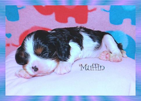 Muffin, little girl @ 26 days