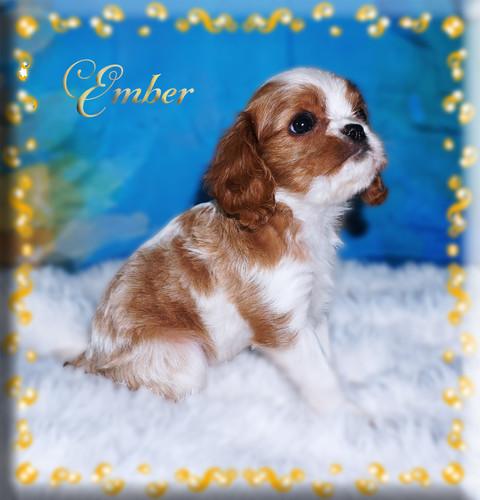21-08-09 Ember 2.jpg
