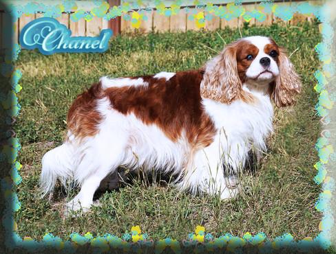 Chanel 7 8-20.jpg