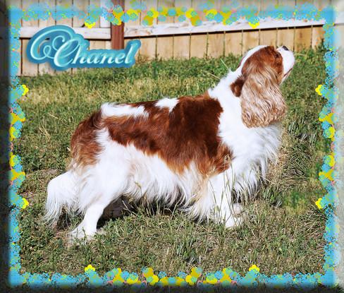Chanel 1 8-20.jpg