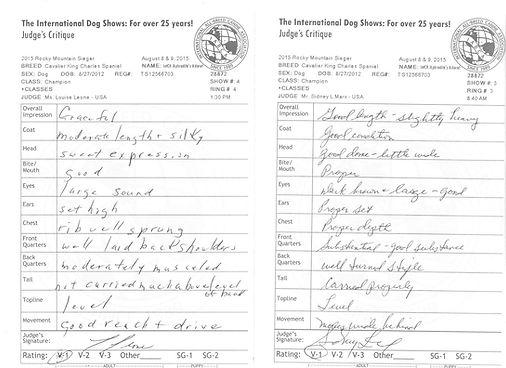 Cavalier King Charles Spaniel dog shows