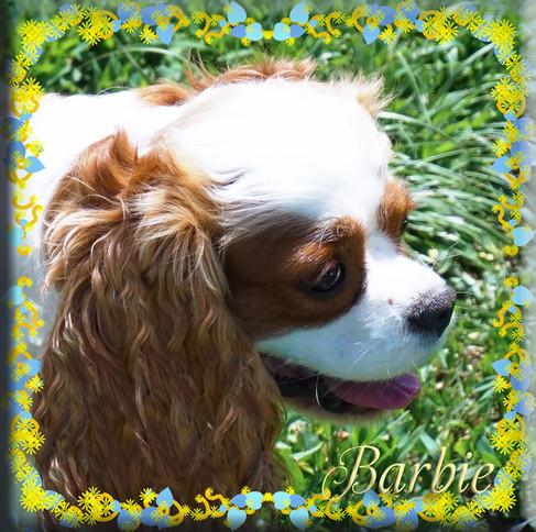 Barbie 8 5-25-20.jpg