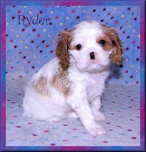 19-02-04 Ryder 4 41d.jpg