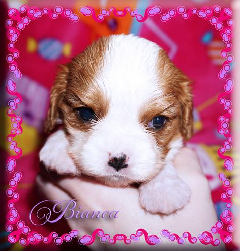 21-03-26 Bianca 4 4w.jpg