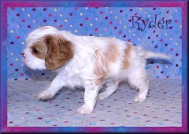 19-02-04 Ryder 5 41d.jpg