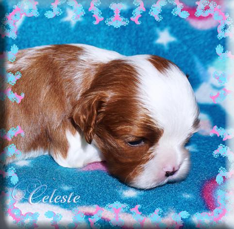21-04-06 Celeste 5 1m.jpg