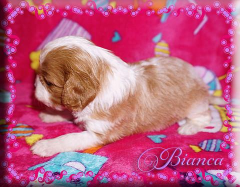 21-03-26 Bianca 6 4w.jpg