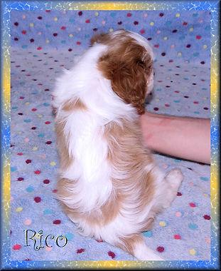 19-02-04 Rico 6 44d.jpg