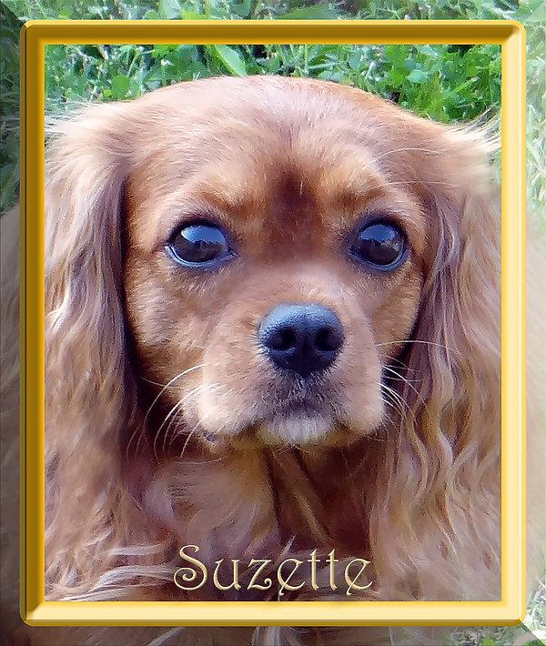 Suzette 1 8-18.jpg