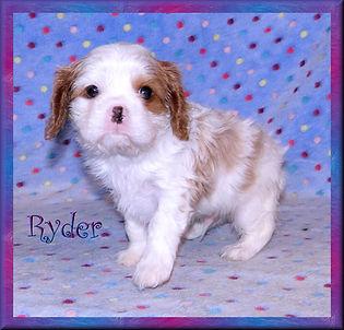 19-02-04 Ryder 8 41d.jpg