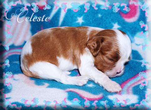 21-04-06 Celeste 2 1m.jpg