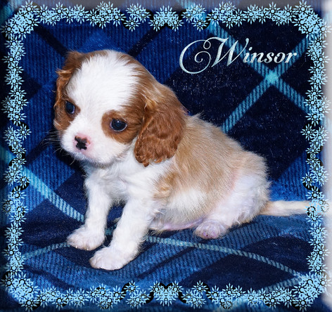 21-01-07 Winsor 1 7w.jpg