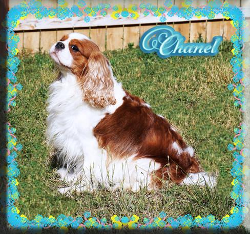 Chanel 2 8-20.jpg