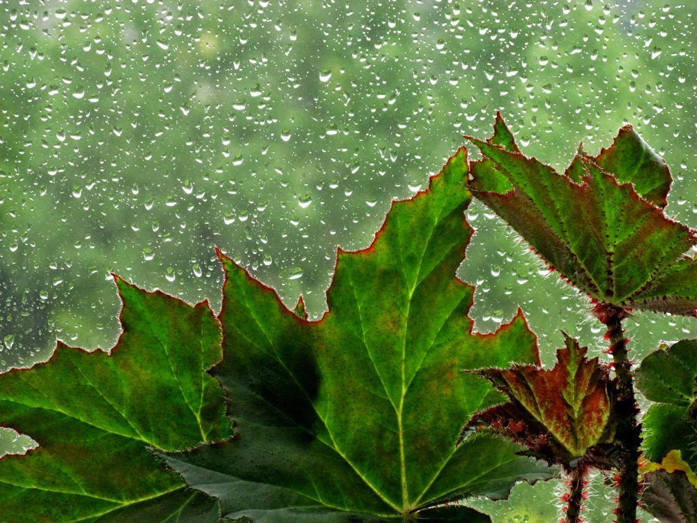 Красная граница дождя