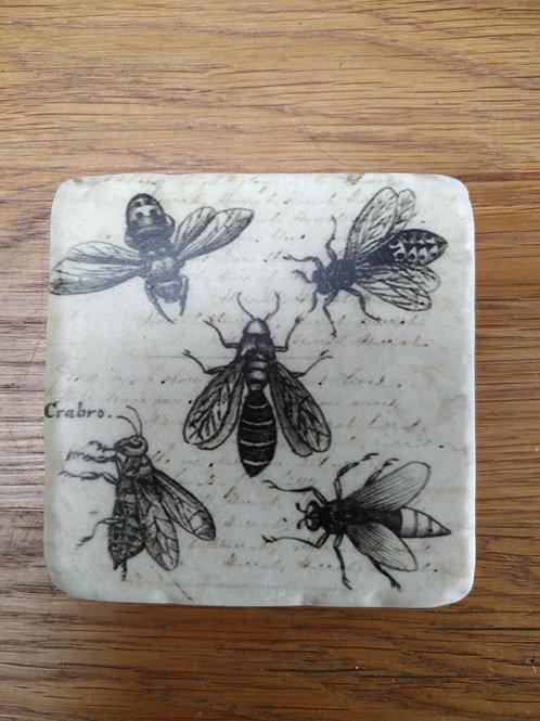 Bee Coaster (crabro)
