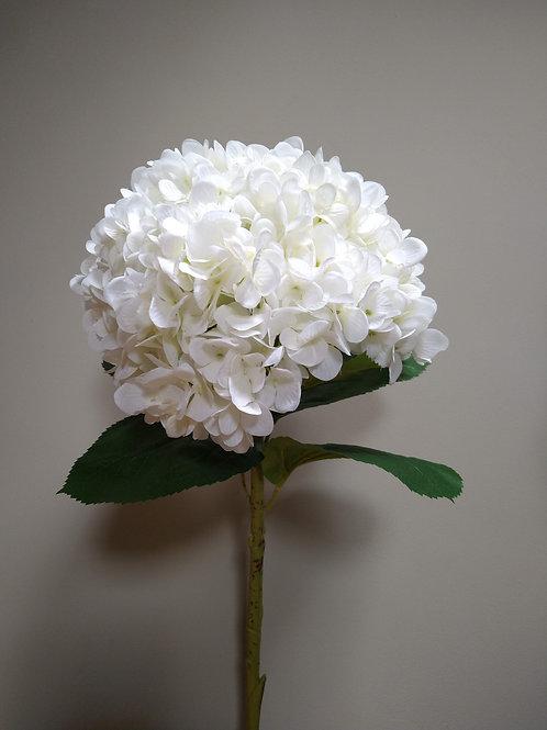 Oversized White Hydrangea