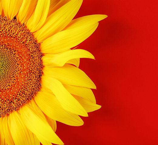 Hallmark-sunflower-nichole-fowler_edited.jpg