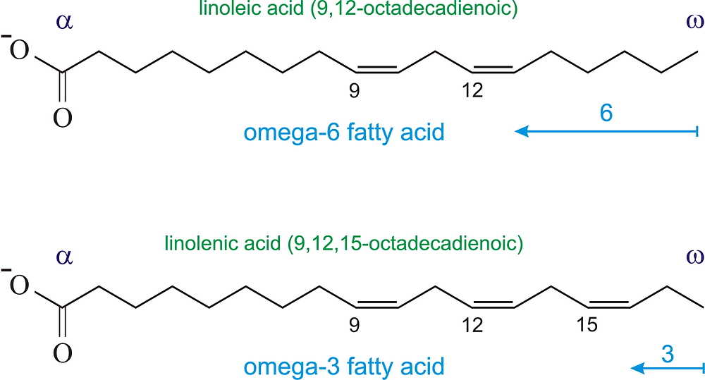 Omega-6 (above) and Omega-3 (below) fatty acids