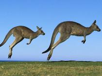"""Какого рода слово """"кенгуру"""": мужского или женского?"""