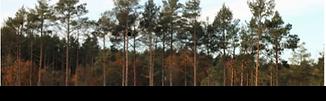 Woods around Horsford