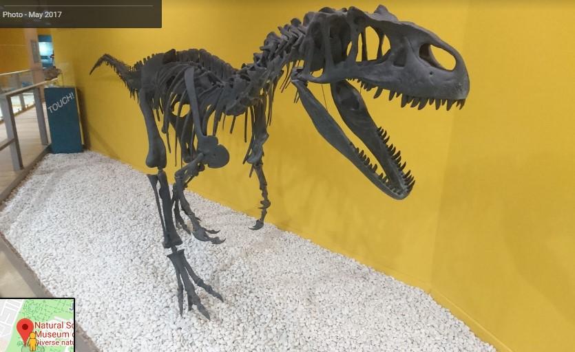 מוזיאון הטבע בולנסיה