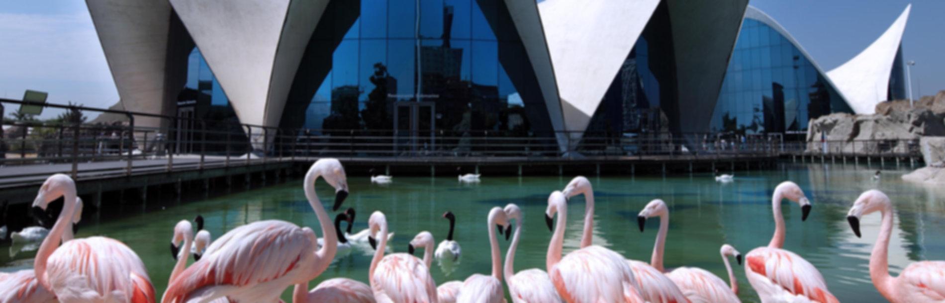 טיולים מאורגנים בולנסיה 2019