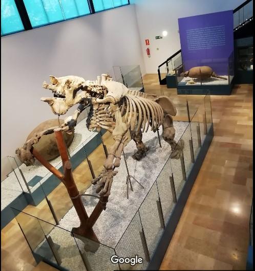 מוזיאון הטבע בולנסיה עם ילדים 2019