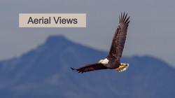 Eagle_Hero_edited
