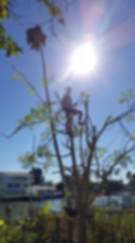 The Moringa Man, United States