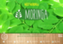 Moringa, Meet Moringa, Florida