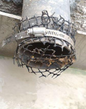老鼠愛排水溝
