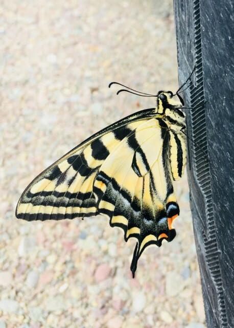 Macro - butterfly.jpg