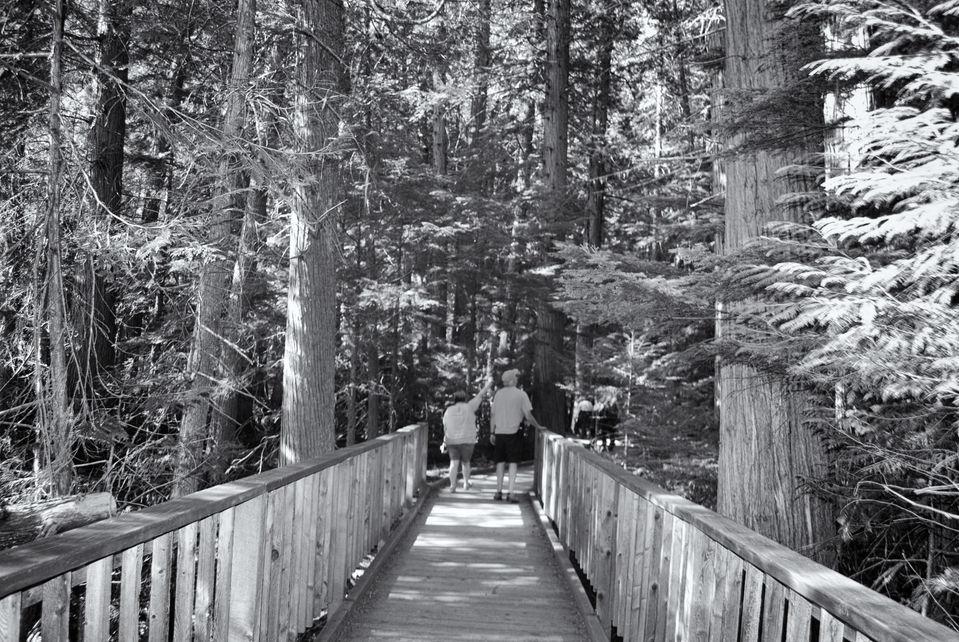 GNP Cedar grove.jpg