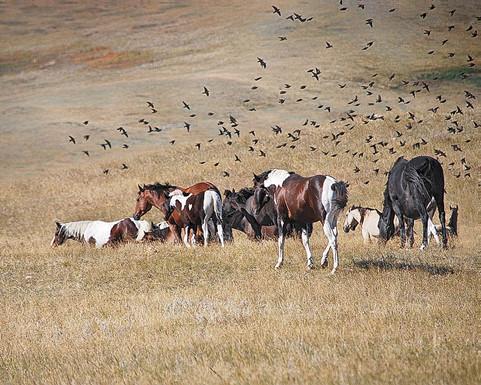 Flocking-the-Herd.jpg
