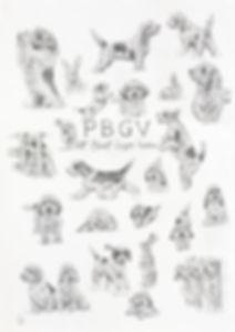 PBGV.jpg