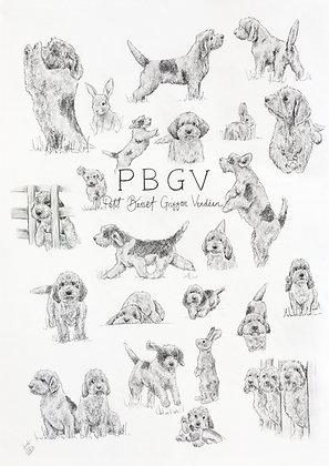 PBGV Breed Celebration