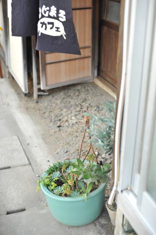 はじまるカフェ 入口 多肉植物 暖簾