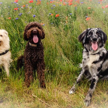 Luca, Janne und Ennah