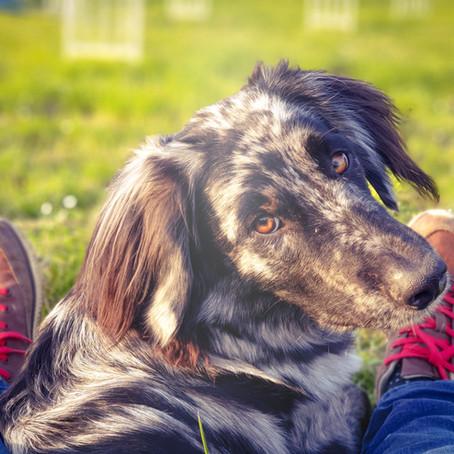 Wissenswertes zum Lernen aus Hundesicht für Welpen- und Hundebesitzer!