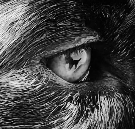 Mensch und Hund - Einfach nur verstehen Teil 1