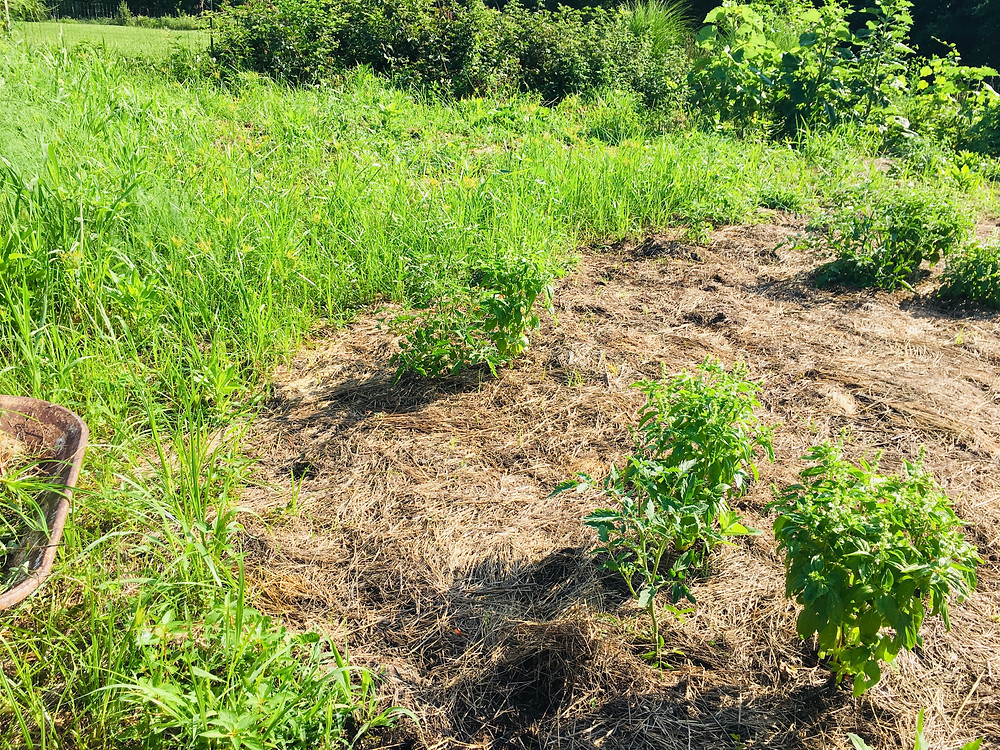 deep mulch weed mess possible with God