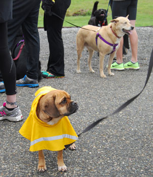 pre-race-3-dogs-yellow-rain.jpg