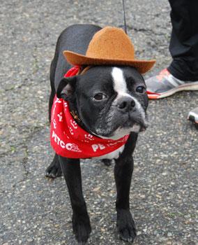 cowboy-dog.jpg