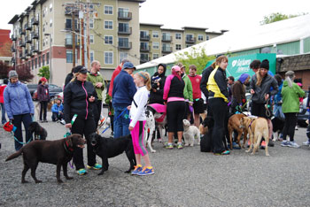 pre-race-bunch-of-dogs.jpg