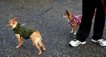 dressed-dogs.jpg