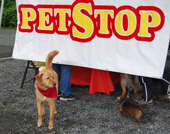 pet-stop-dogs.jpg