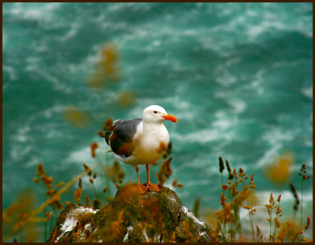 EXH.Sea Gull Cannon Beach 1006.039.DX_6801_2013 Resized.jpg