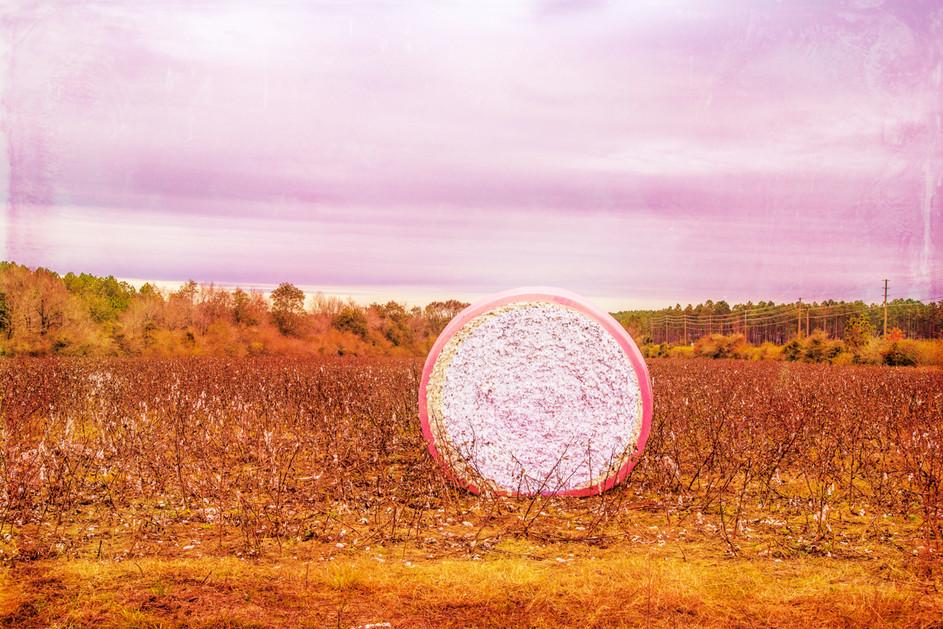 Pink Cotton Bale