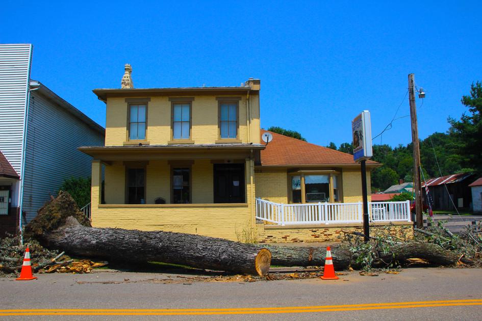 EXH.Fallen Tree 1207.009.DT_4834_2013 Resized.jpg